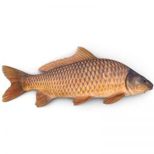 CarpFish_2.jpgac916b9f-f56f-4f6a-99b1-2207c49762f8Default