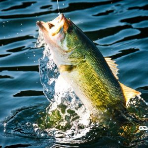 bass-fishing-wallpaper-for-iphone-52-images-800×800
